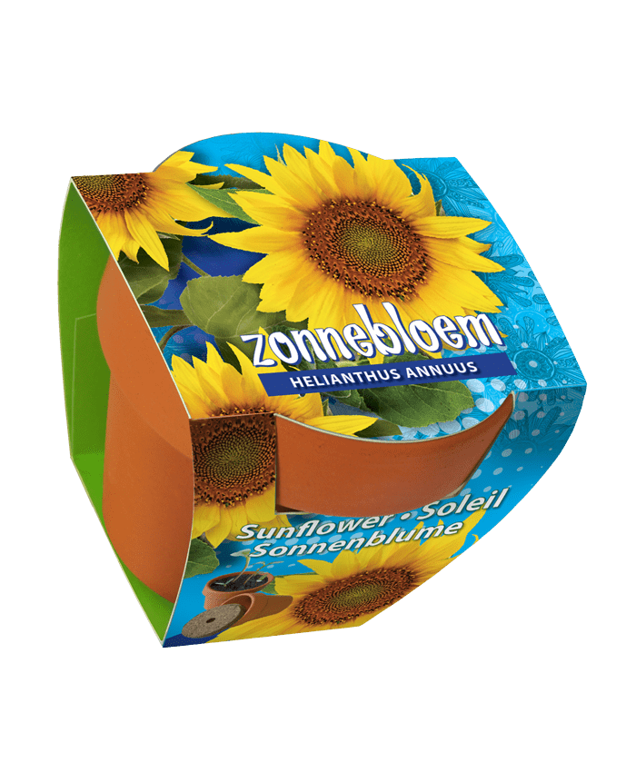 zonnebloem zaden terracotta pot
