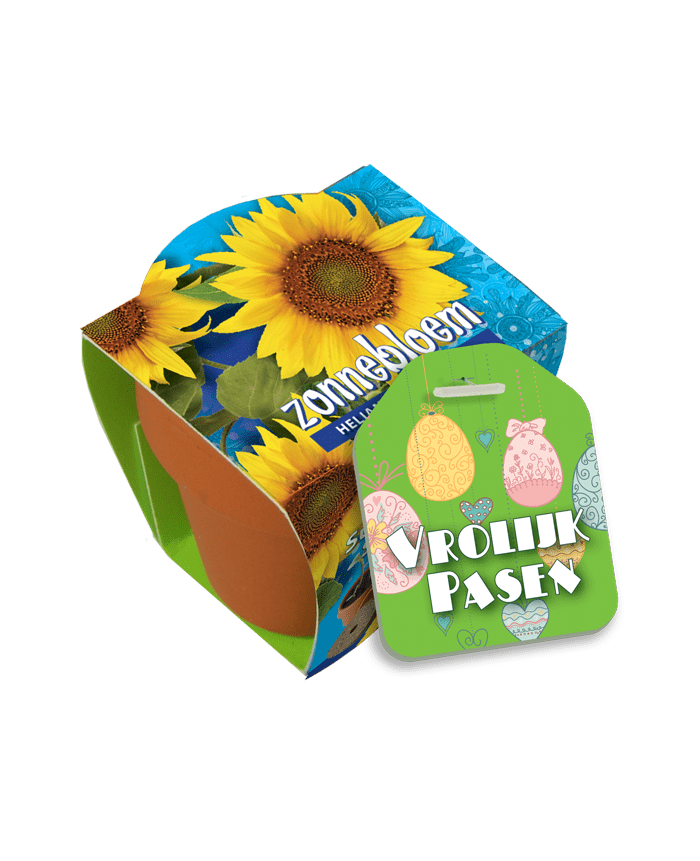 terracotta pot zonnebloem met label pasen